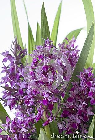 Bouquet lilac flowers
