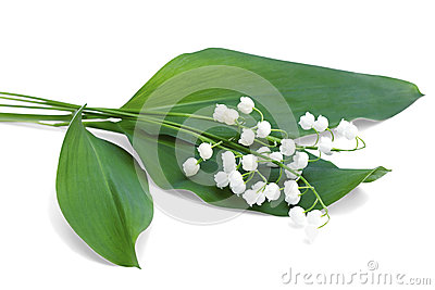 A bouquet of lilies of the valley