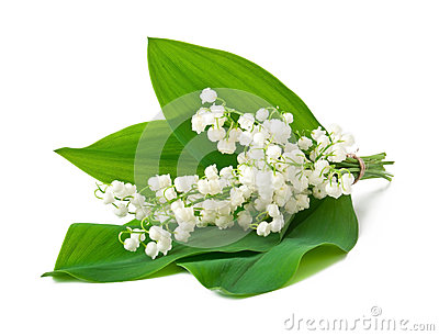 Bouquet of lilies of the valley