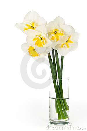 Bouquet of narcissuses in a glass