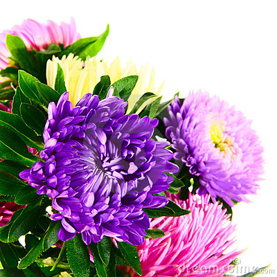 Free Bouquet Of Asters Stock Images - 21438844