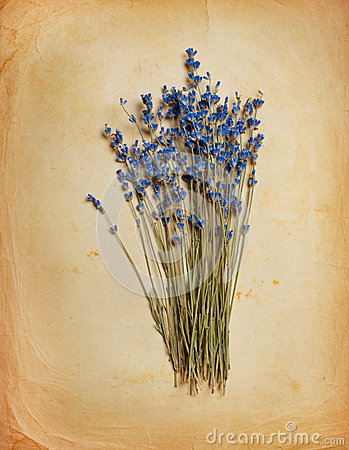 Free Bouquet Of Dried  Lavender Stock Images - 27850314