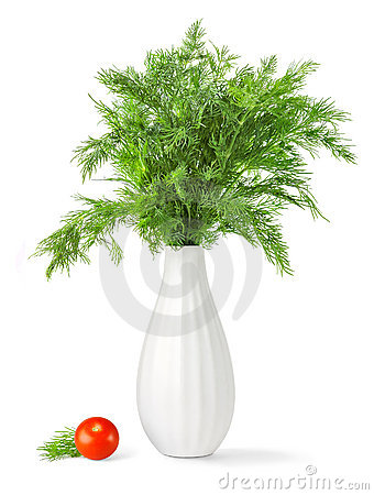Free Bouquet Of Fresh Green Dill In A Vase Royalty Free Stock Photography - 13501657