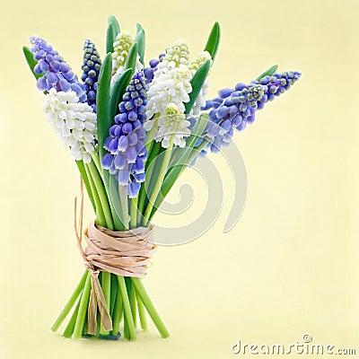 Free Bouquet Of Grape Hyacinth Flowers Stock Photo - 38375780