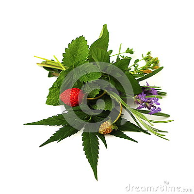 Free Bouquet Of Herbs Stock Photo - 29438500