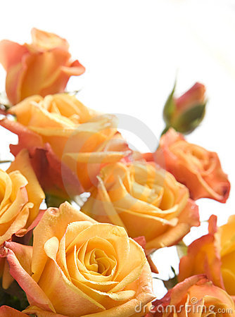 Free Bouquet Of Orange Roses Royalty Free Stock Photography - 10555227
