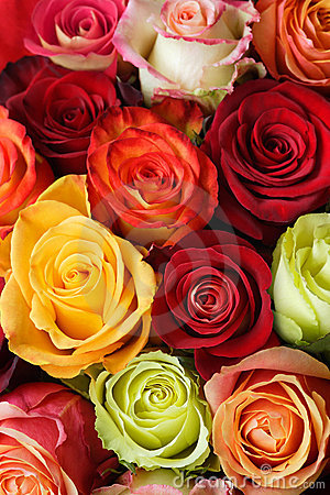 Free Bouquet Of Roses Stock Images - 5405324