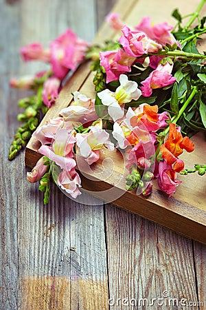 Free Bouquet Of Snapdragon (Antirrhinum Majus) On Vintage Wooden Boar Stock Image - 42170741
