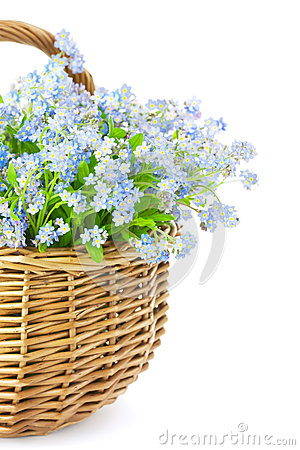 Free Bouquet Of Spring Flowers In Basket Isolated On White Background Royalty Free Stock Images - 28828679