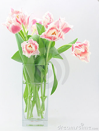 Free Bouquet Of Tulips Stock Photo - 559170