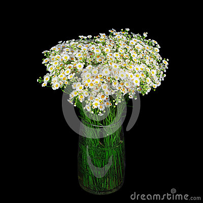 Free Bouquet Of Wild Daisies In A Glass Vase. Royalty Free Stock Photo - 78409585