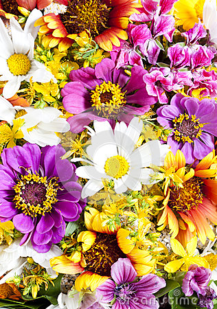 Free Bouquet Of Wild Flowers Stock Photography - 32599272