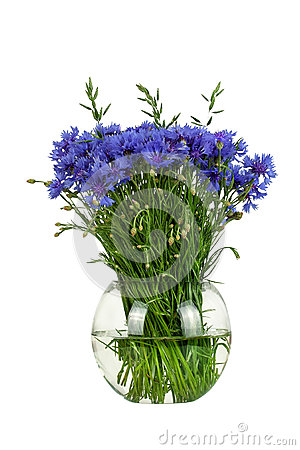 Free Bouquet Of Wildflowers -  Cornflowers In A Glass Vase Isolated On White Background Royalty Free Stock Images - 45659659
