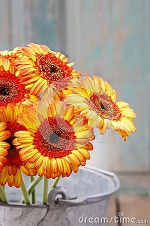 Bouquet of orange gerbera daisies in silver bucket