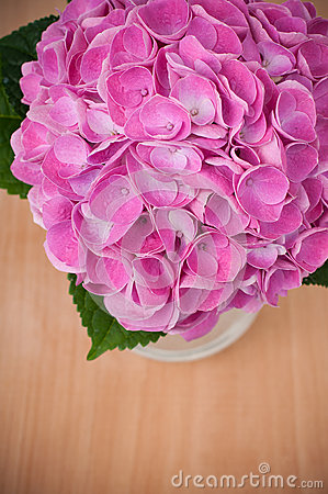 Pink hydrangeas on a wooden table