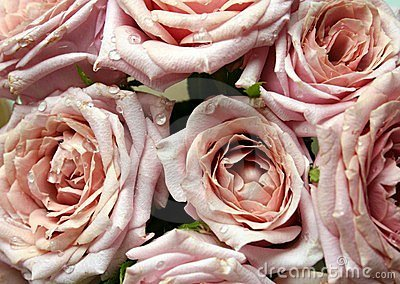 Bouquet of Pink Roses with Dew