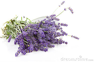 Bouquet of plucket lavender