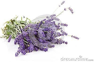 Bouquet of plucket lavender