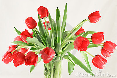 Bouquet of red tulips in glas vase
