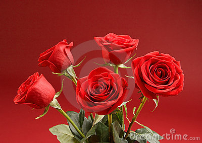 Bouquet of roses on the red background