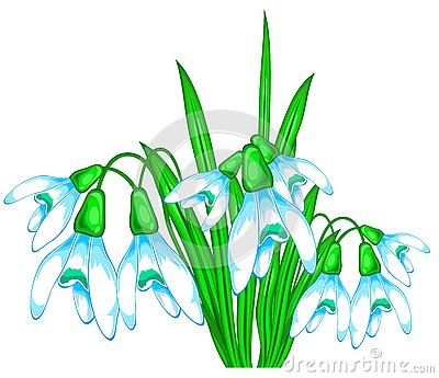 Bouquet of snowdrops