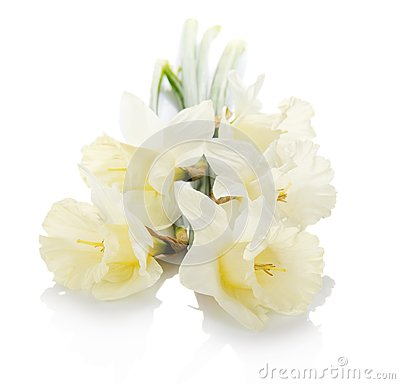 Bouquet of the spring narcissuses