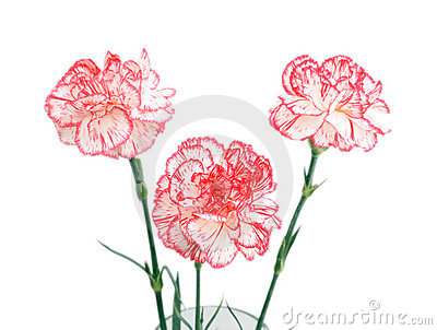 Bouquet of three carnations