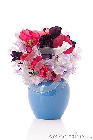 Bouquet Vetchling