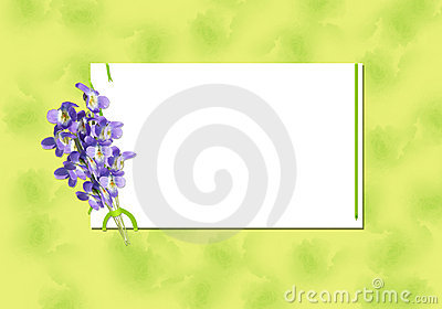 Bouquet of  viola with green band