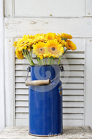 Bouquet of yellow gerbera daisies in blue bucket