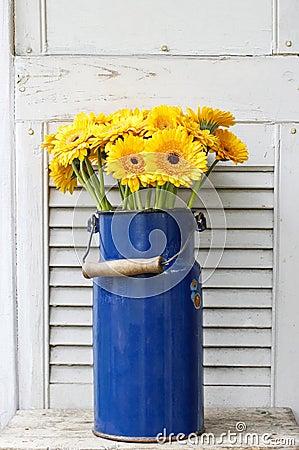 Bouquet of yellow gerbera daisies in blue bucket
