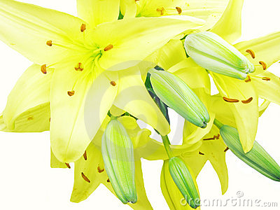 Bouquet of yellow lilies