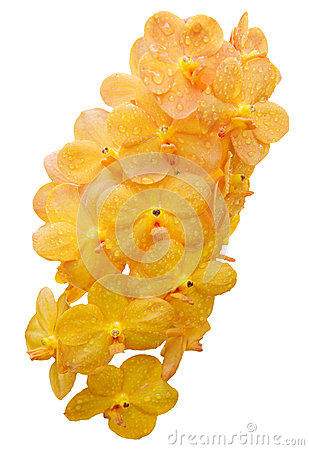 Bouquet of yellow orchid flower isolate white
