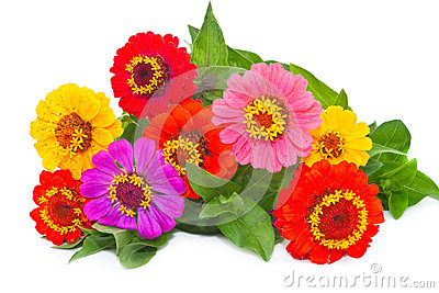 Bouquet Zínnia.