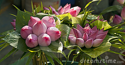 Bouquets of Lotus Buds
