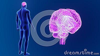 Bourdonnement d'esprit humain avec le corps clips vidéos