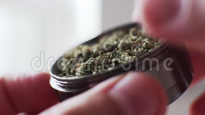 Bourgeons de marijuana de broyeur dans le macro superbe Culture des bourgeons médicaux de tabagisme de cannabis banque de vidéos