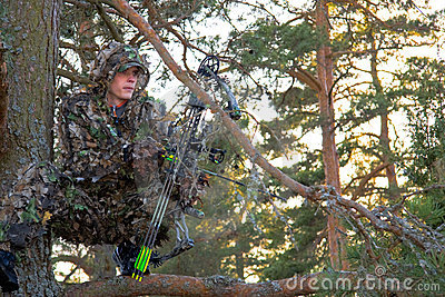 Bow hunter in tree