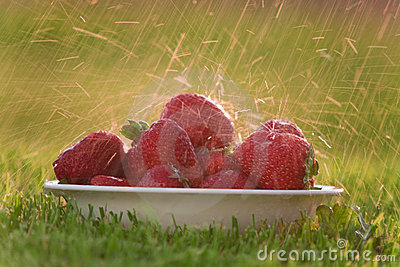 Bowl of strawberries in the rain