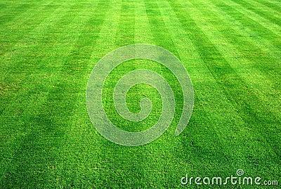 Bowling green grass.