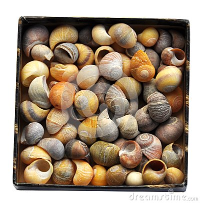 Free Box Full Of Seashells Royalty Free Stock Photo - 30215215