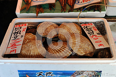 Box of Scallops Editorial Stock Image