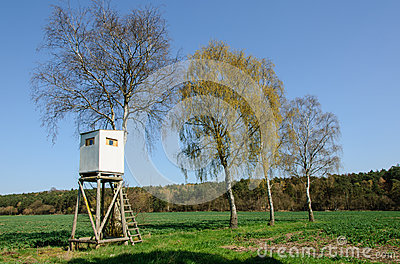 Box stand at a row of birches