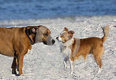 Boxer Basset and Sheltie Collie Papillon mixed breed dogs.