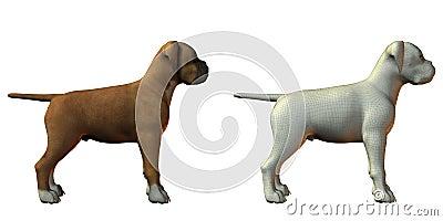 Boxer dog 3d model