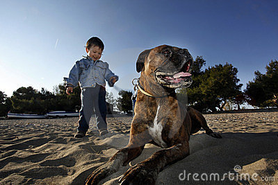 Boxer dog and little boy