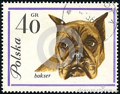 Boxer dog on a vintage post stamp