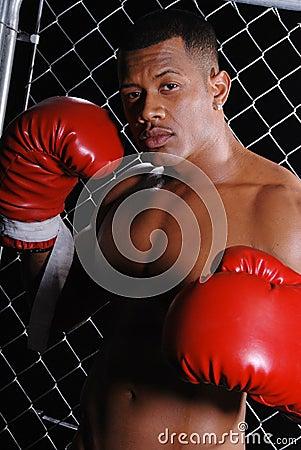 Boxer man.