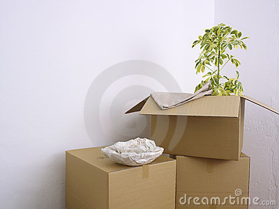 Boxes and plant in corner