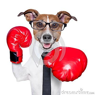 Free Boxing Dog Stock Photography - 30596052